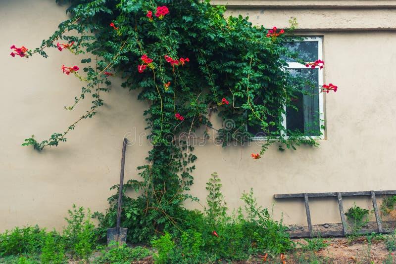 Vägg och fönster av ett landshus, uteplats fotografering för bildbyråer
