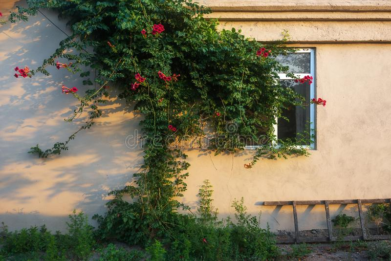 Vägg och fönster av ett landshus, uteplats royaltyfria foton