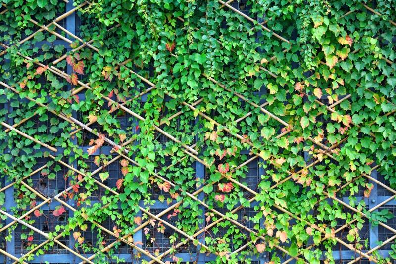 Download Vägg och gröna växter arkivfoto. Bild av modell, natur - 27279714