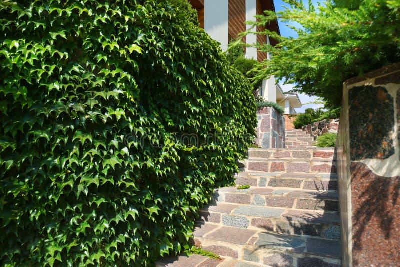 Vägg som täckas med murgrönan nära stentrappa i modern trädgård royaltyfria bilder