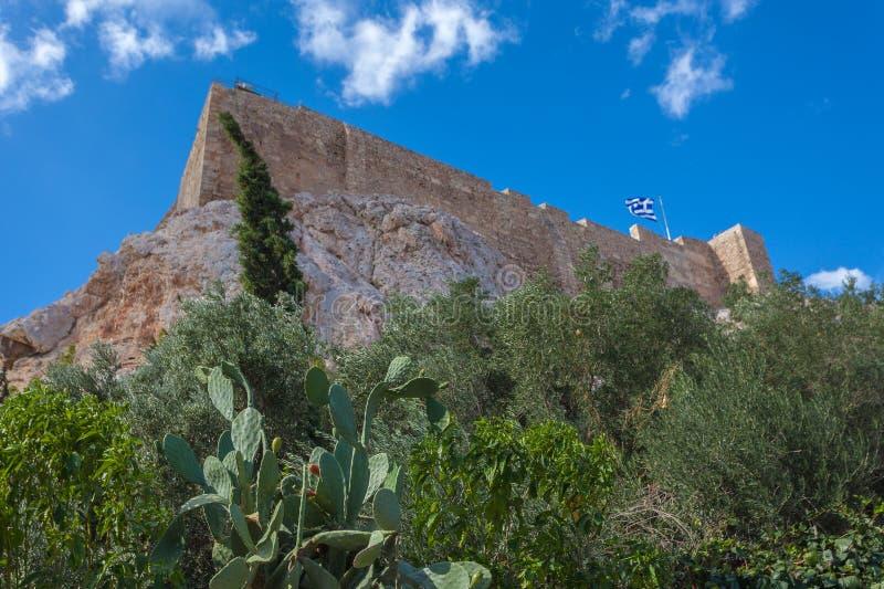 Väggar av akropolen av Aten med windblown träd och det taggiga päronet fotografering för bildbyråer