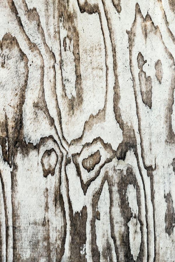 Väggbakgrundstextur tryckte på wood grunge befläckt ojämn blick fotografering för bildbyråer