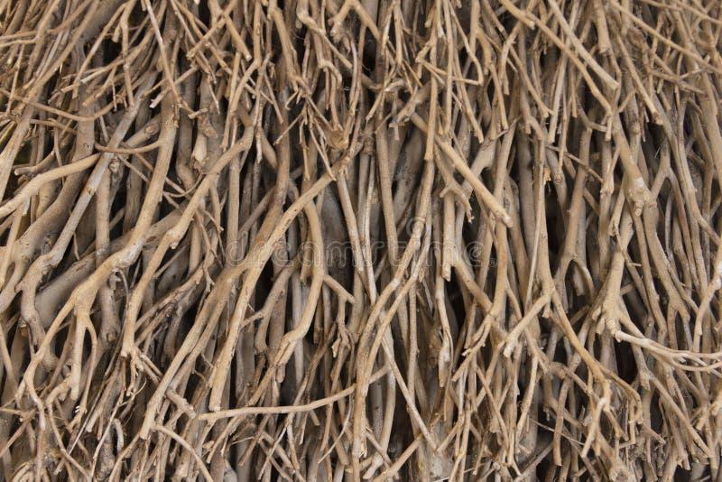 Väggbarriärer av insnärjda träspån och torkade grenar av träbakgrund royaltyfria bilder