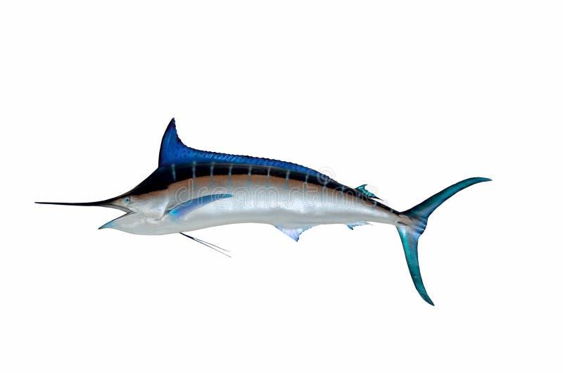 Väggmontering för blå marlin stock illustrationer