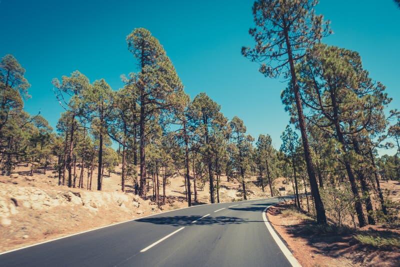 Väghoskog, berglandskap - huvudväg och natur arkivfoto