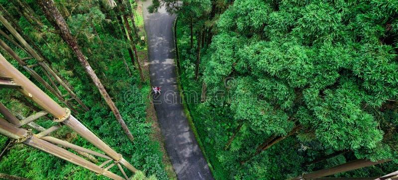 Vägkorsning skogen royaltyfria bilder