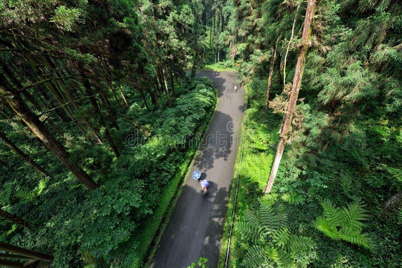 Vägkorsning skogen arkivfoto