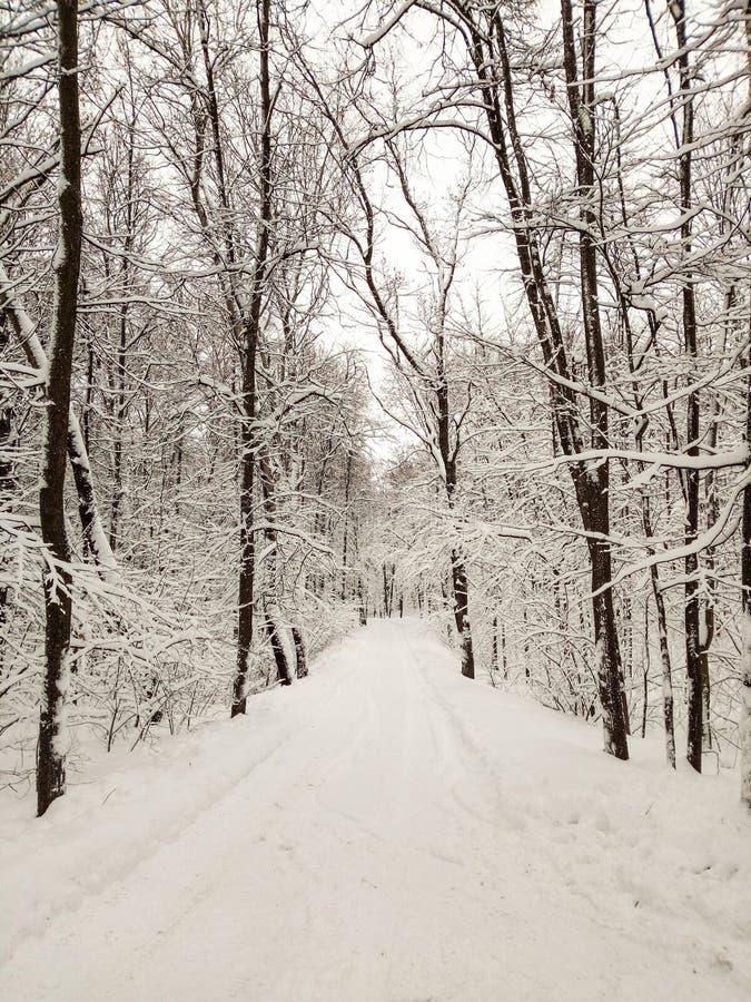 Vägsnö som täckas i snöig skog för vinter royaltyfri bild