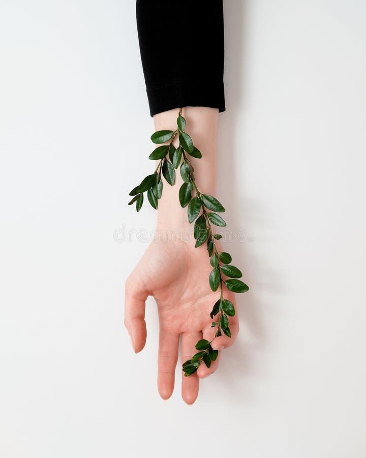 Väl ansad kvinnas hand med gröna sidor på tabellen Skönhetsmedel för handanti-skrynkla Naturlig skönhet, mjukhet och hud c royaltyfria foton