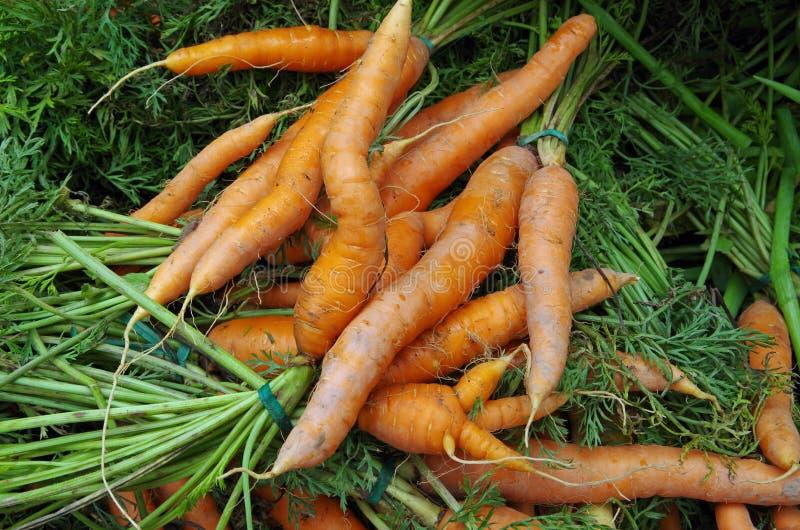 Välformade morötter och morotblast royaltyfri foto