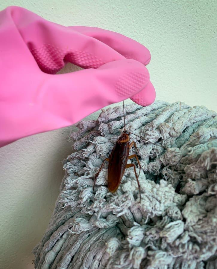 Välj upp kackerlackor fotografering för bildbyråer