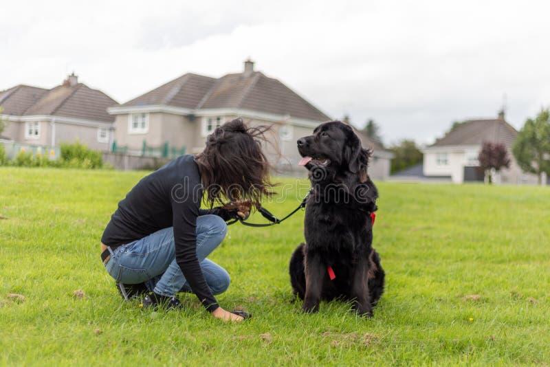 Väljer unidentifiable kvinnor upp ett hundkapplöpningbajs i gräset, medan hunden väntar royaltyfria bilder
