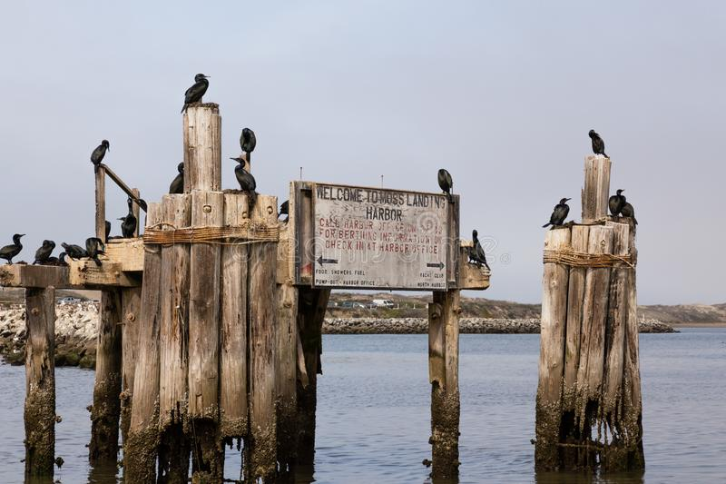 Välkomnande till det Moss Landing Harbor tecknet med svarta fåglar royaltyfri bild