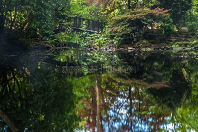 Välvd träbro över dammet för dekorativ trädgård royaltyfria bilder