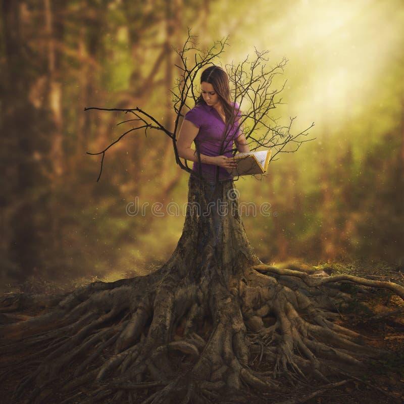 Vända in i ett träd arkivbilder