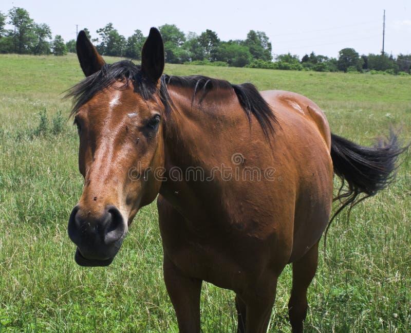 vänlig häst royaltyfria foton