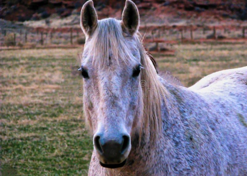 Vänlig häst på Sorrel River royaltyfri bild