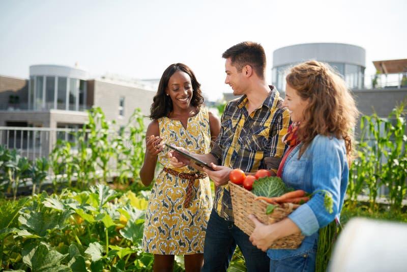 Vänligt lag som skördar nya grönsaker från takväxthusträdgården och planerar skördsäsong på ett digitalt royaltyfri foto