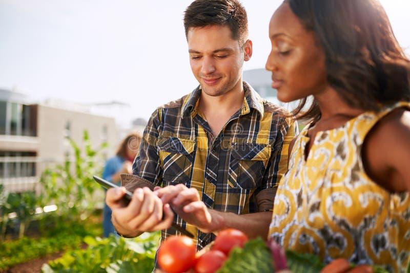 Vänligt lag som skördar nya grönsaker från takväxthusträdgården och planerar skördsäsong på ett digitalt arkivbilder
