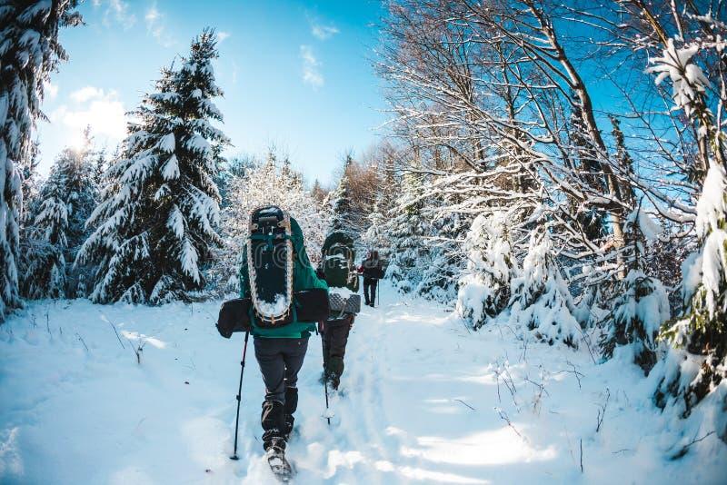 Vänner i vintern som trekking i bergen royaltyfria foton