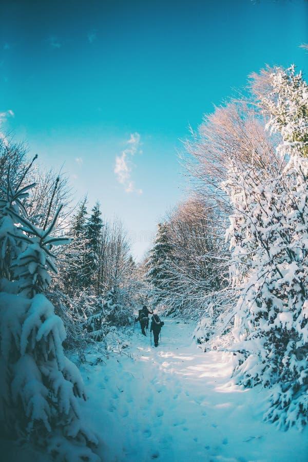 Vänner i vintern som trekking i bergen arkivbild