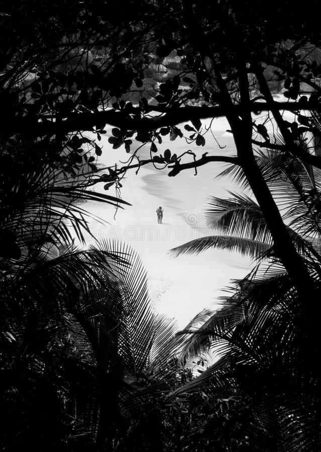 Vänner på en öken sätter på land sett igenom en tropisk skog arkivbild