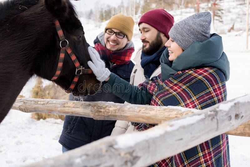 Vänner som daltar hästar på ranch arkivbilder
