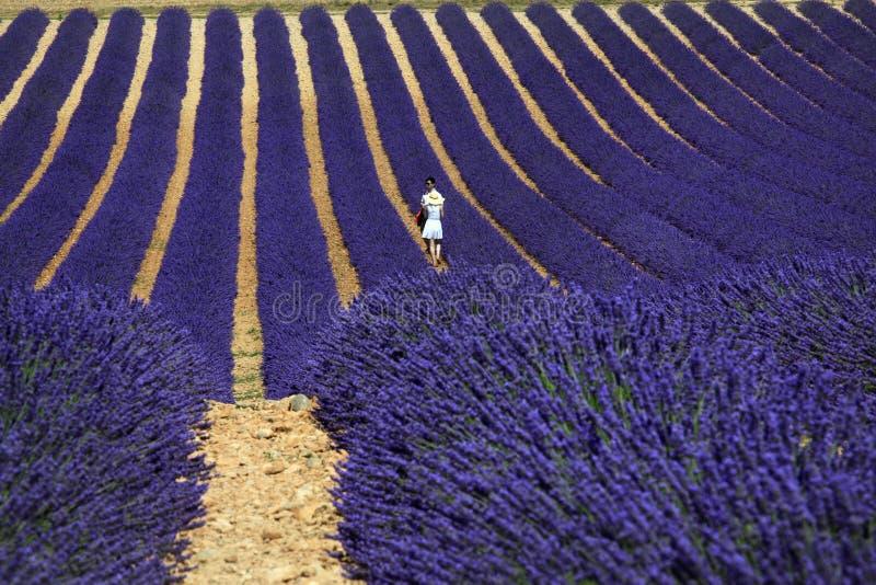 Vänner som går bland lavendel, Valensole, Provence arkivfoton