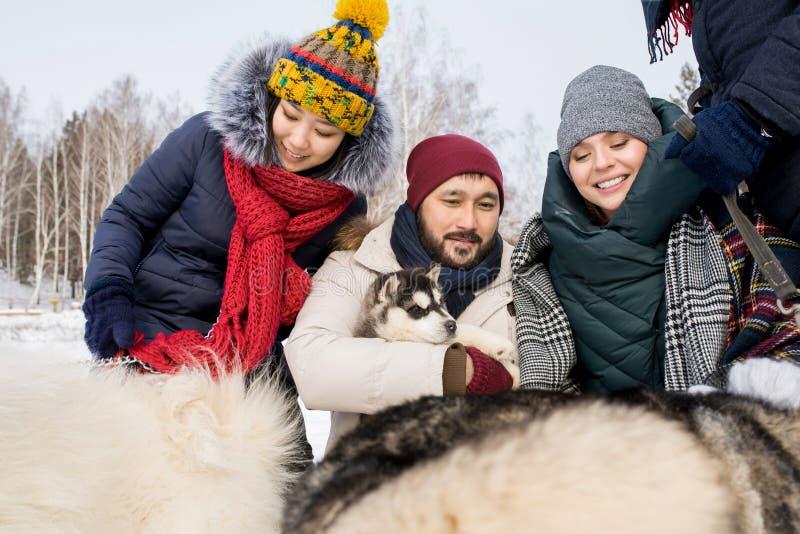 Vänner som spelar med Husky Dogs fotografering för bildbyråer