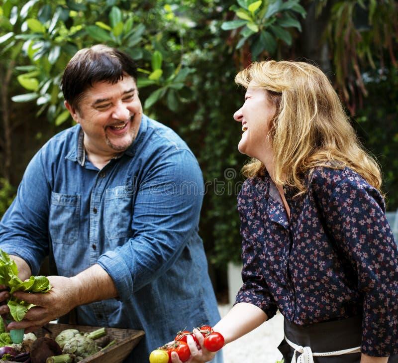 Vänner som tillsammans talar, medan rymma den nya grönsaken royaltyfri fotografi