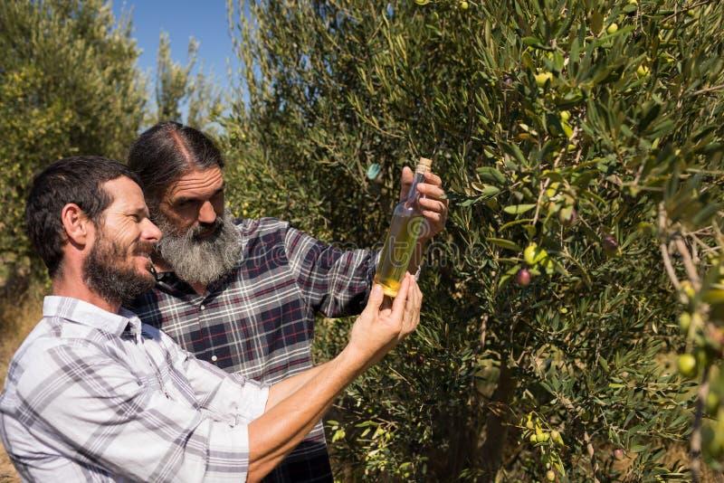 Vänner som undersöker olivolja i lantgård arkivbilder