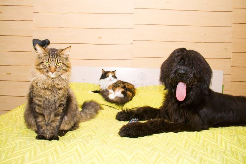 vänner tre royaltyfria bilder