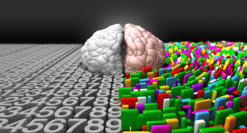 Vänster hjärna & höger hjärna vektor illustrationer