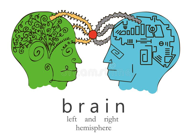 Vänster och höger mänsklig hjärna också vektor för coreldrawillustration vektor illustrationer