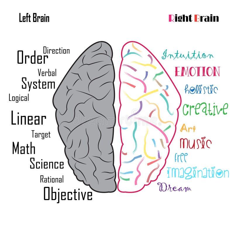 Vänstra högra funktioner för mänsklig hjärna vektor illustrationer