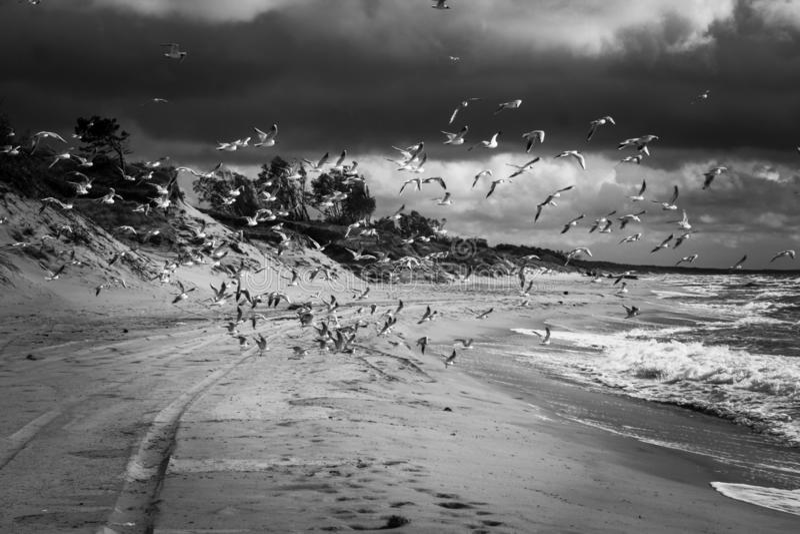 Vänta på en havsstorm arkivfoto