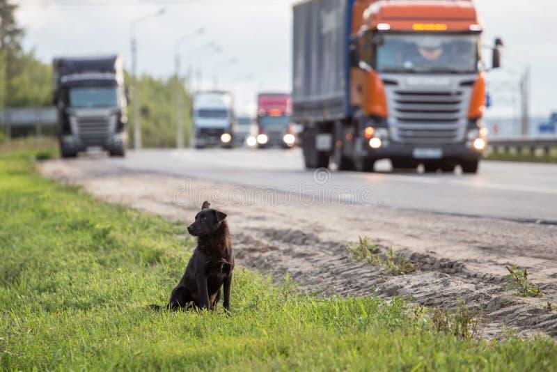 Väntande ensam tillfällig hemlös hund på vägen arkivfoton