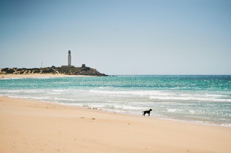 Väntande hund nära det ljusa huset i havet royaltyfri bild