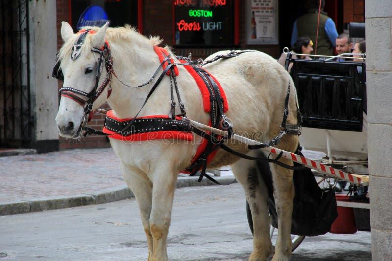 Väntande på biljettpris för häst och för barnvagn, Boston, 2014 royaltyfri foto