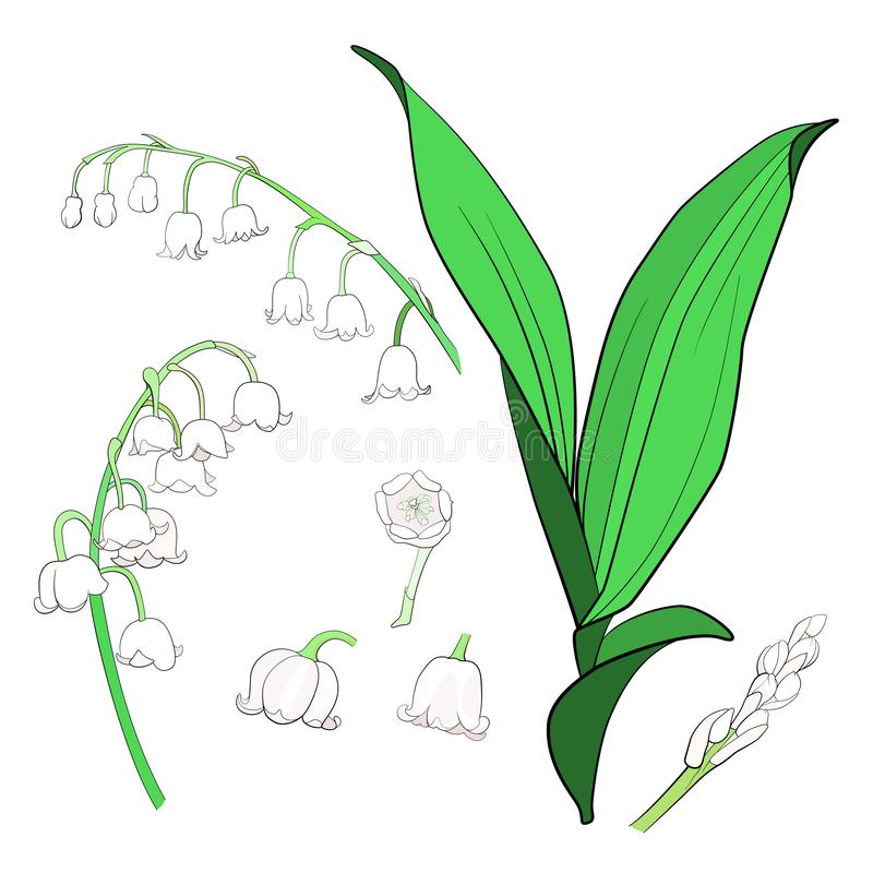 värld för vildmark för dal för liljanaturryss royaltyfri illustrationer