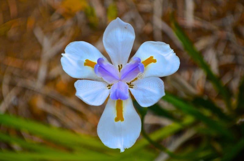 värld för vildmark för dal för liljanaturryss royaltyfri foto