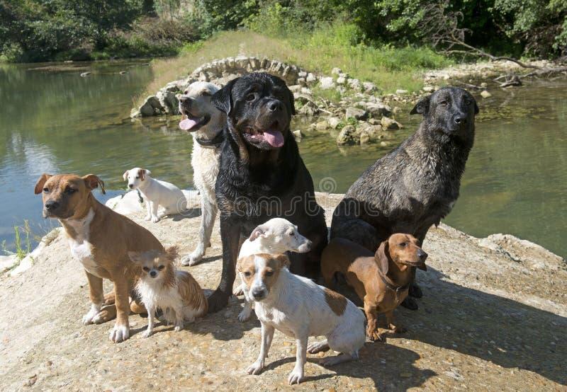 värld för vildmark för ryss för hundgruppnatur royaltyfri fotografi