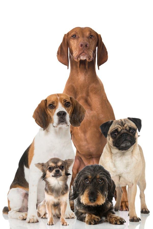 värld för vildmark för ryss för hundgruppnatur royaltyfri bild