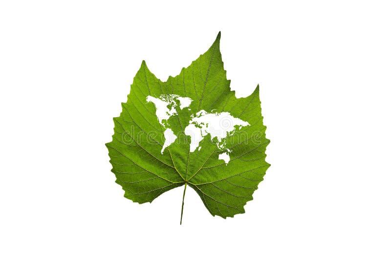Världen kartlägger på en grön leaf royaltyfria bilder