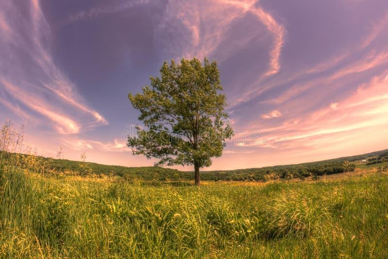 Världsfrämmande träd på kullen royaltyfria foton