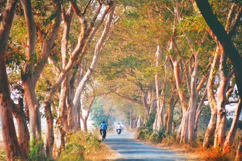 Västra Bengal, Indien royaltyfria bilder