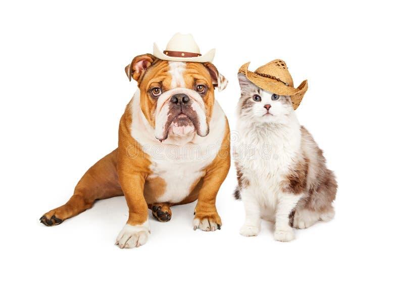 Västra cowboy Cat och hund arkivfoto