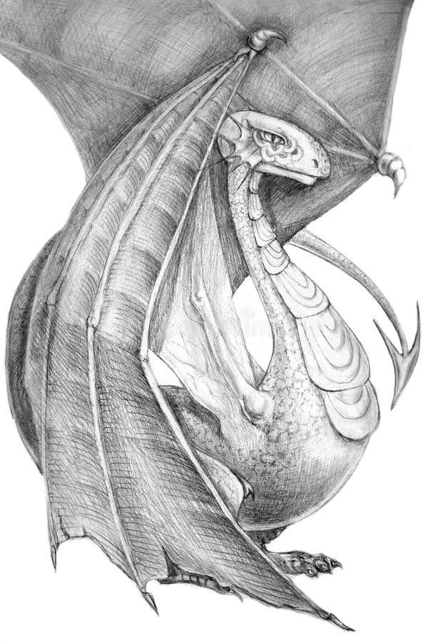 Västra - den europeiska drakekämpen sitter Grå blyertspennateckning på vit bakgrund skuggnintt En vinge viks, annan utplaceras royaltyfri illustrationer