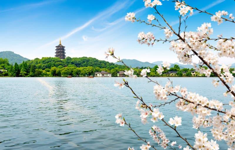 västra porslinhangzhou lake royaltyfri foto