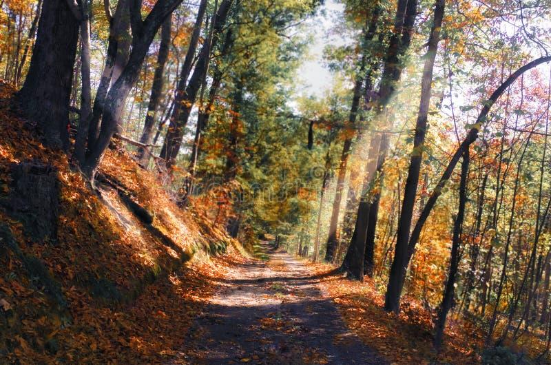 Västra Virginia Foliage royaltyfria foton